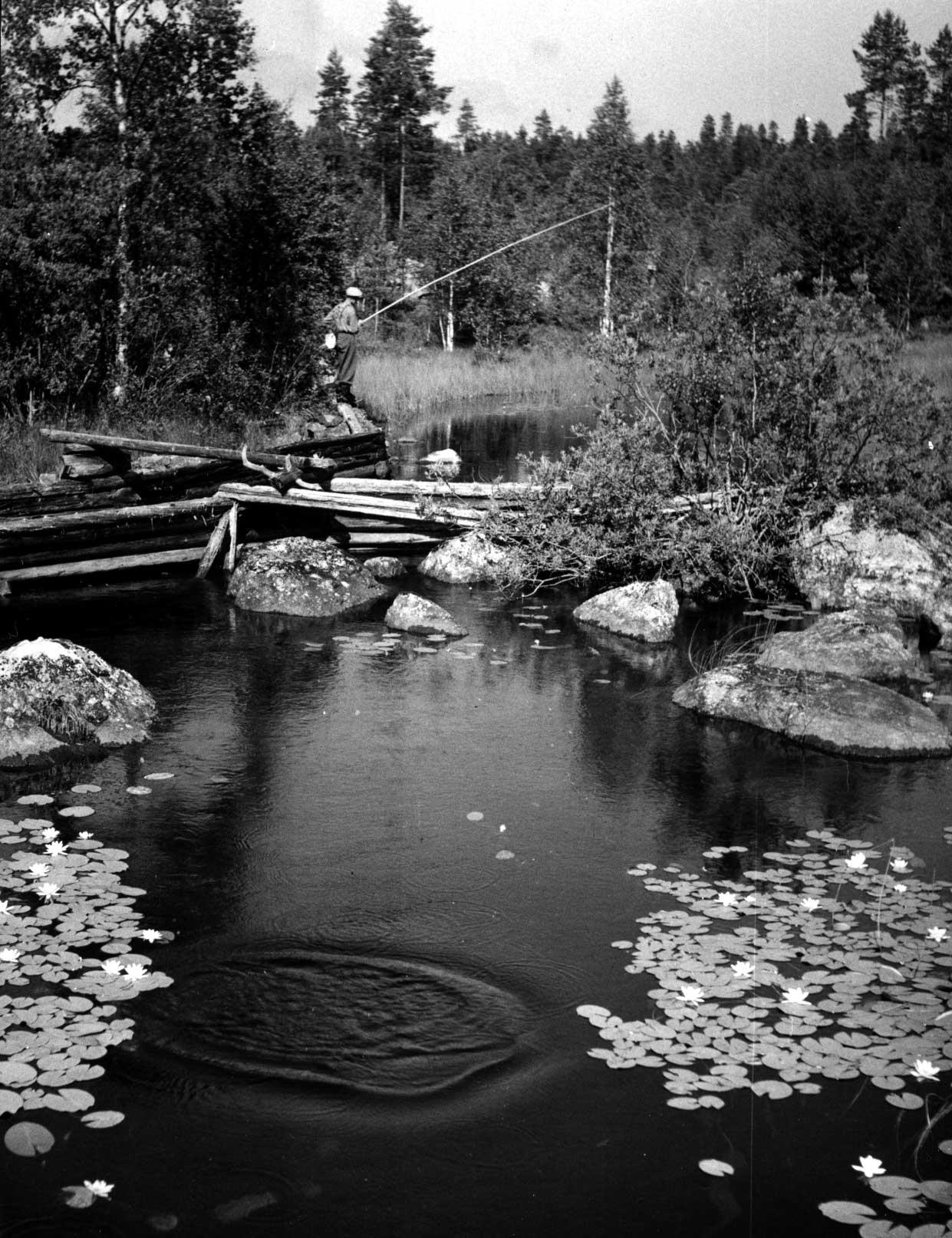 Foto på älv av Hans Lidman