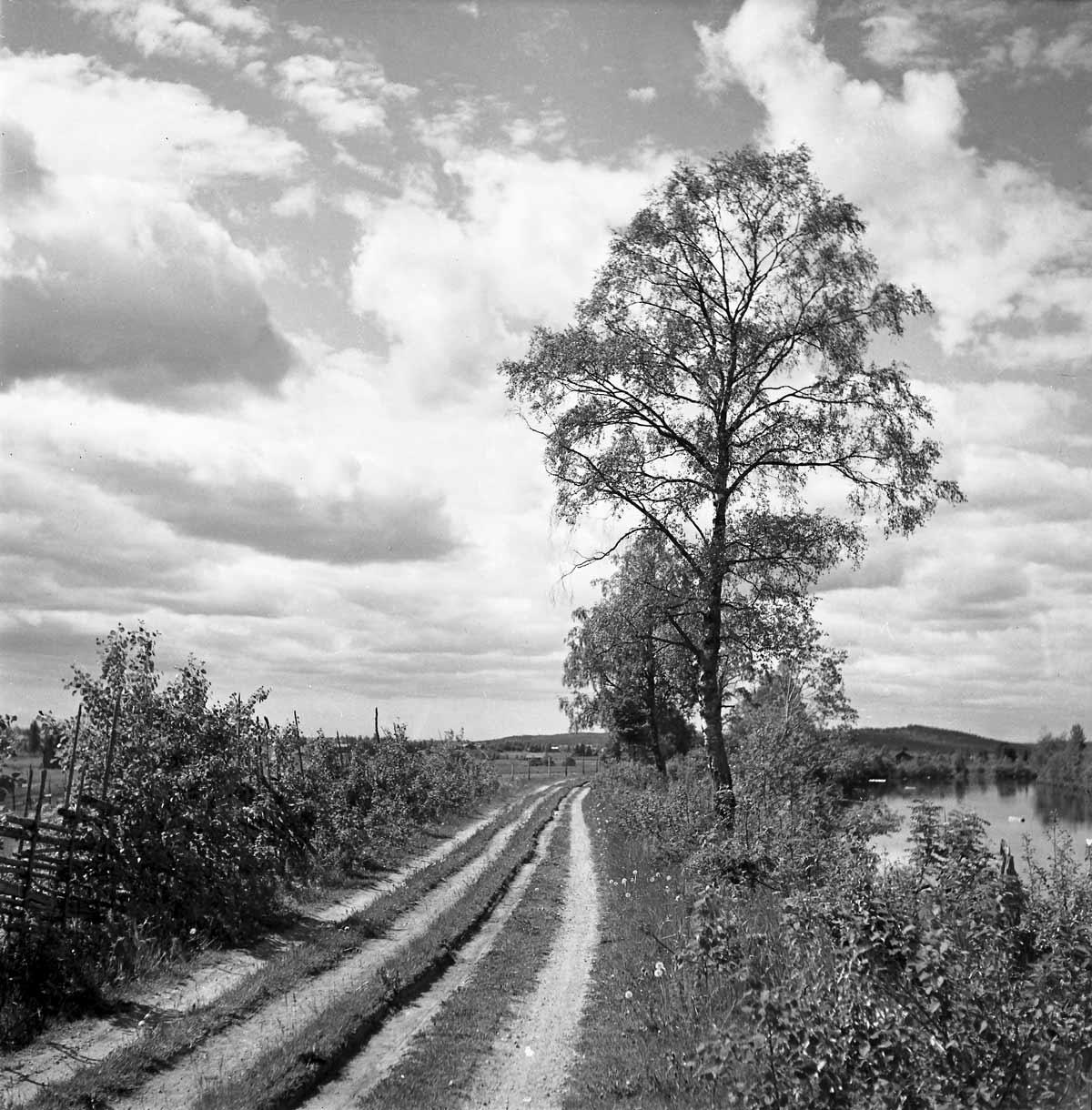 Hans Lidman gamla landsvägen